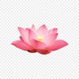 lotus_png_818518